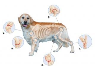 Корм для собак при заболевании суставов