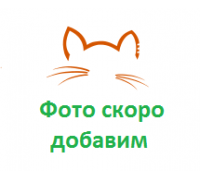 Туалет Догман для кошек Триплекс малый 31х13х41см